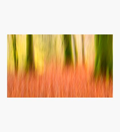 Fire in the woods Photographic Print