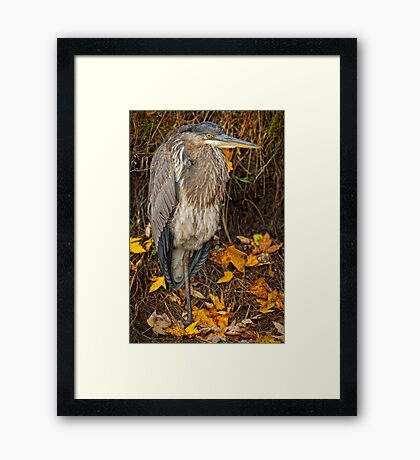 Fall Heron Framed Print