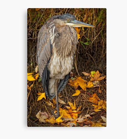 Fall Heron Canvas Print