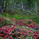 Dreamy Photo . ★★★★★ . Nature wonders - Lofoten Islands. Norway . 2011. by Brown Sugar . by © Andrzej Goszcz,M.D. Ph.D