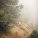 Mountain Fog by Ellen Cotton