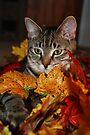 My Little Helper by jodi payne