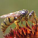 Hornet On Firewheel by Arla M. Ruggles