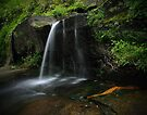 Sydney Waterfalls - Willoughby Falls #2 by vilaro Images