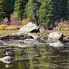 Red Rock Lake Fall Study 1  by Robert Meyers-Lussier