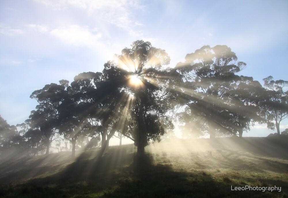 ~ Sunburst ~ Oakbank ~ by LeeoPhotography
