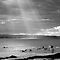SURFERS ON THE SEA... BLACK AND WHITE ONLY!! $20 RB Voucher for Oct