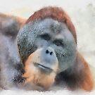 Orangutan by Eve Parry