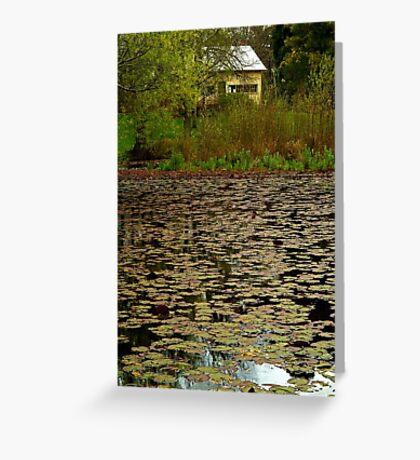 Lilies, Jubilee Lake, Daylesford Greeting Card