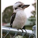 Australian Kookaburra by Elisabeth Dubois