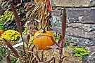 Harvest Season Vignette by MotherNature