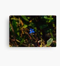 insect on the flower Canvas Print