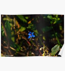 insect on the flower Poster
