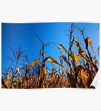 October Corn Poster