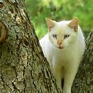 Beige Cat Watching From Crotch of Tree on Neighbors Front Lawn by MeMeBev