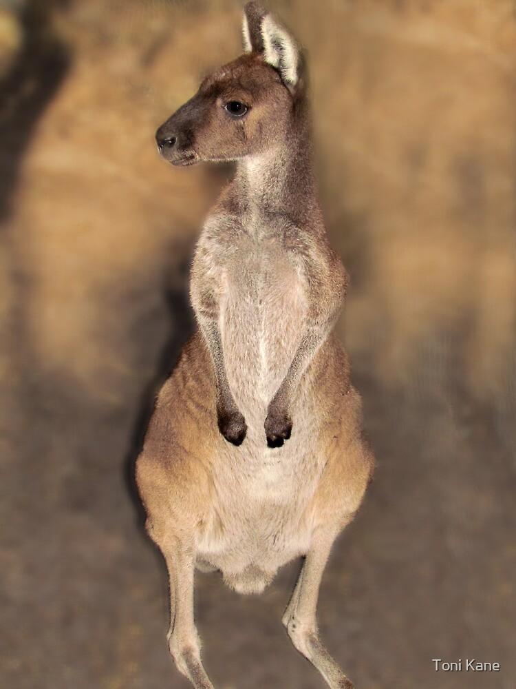 Where's My Momma? Peel Zoo, Pinjarra, Western Australia by Toni Kane
