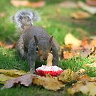 Squirrel and Cupcake by GlennB