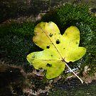 Leaf on Moss by GlennB