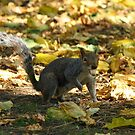 Nuts About Autumn by GlennB