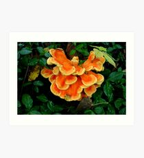 Sulphur Shelf fungus Art Print
