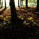 Sunset in Forest by GlennB