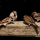 Beautiful birds at play by MaluC