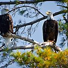 Double Eagle by MNDustyLens