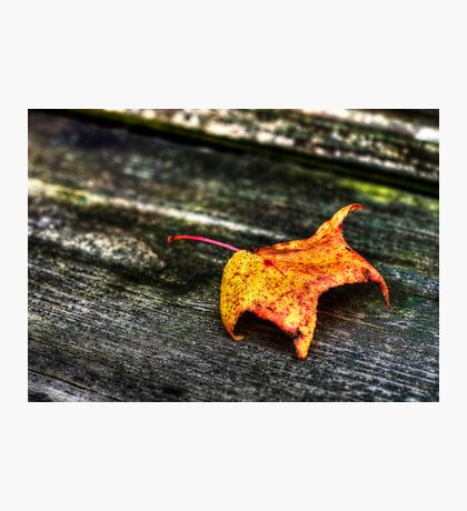 it's fall again... Photographic Print