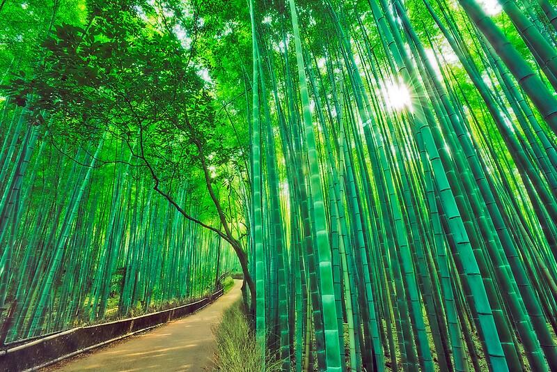 Quot Bamboo Forest At Sagano Arashiyama Kyoto Quot By Yves
