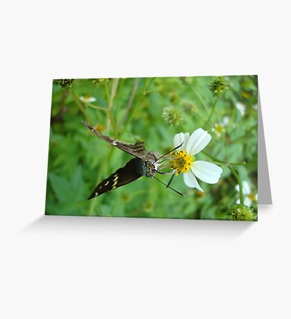 Long-tailed Blue Skipper on Spanish Needles Greeting Card