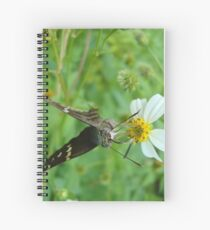 Long-tailed Blue Skipper on Spanish Needles Spiral Notebook