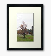 OCTOBER TREE Framed Print