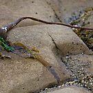still life on the beach  by TerrillWelch