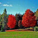 Fall From Home by Robert Goulet
