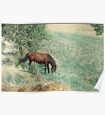 ALLA MIA CARA AMICA LAURA DI BARDI ...VALCENO..ITALIA -EUROPA-2500 VISUALIZZ.MAGGIO 2013 --- FEATURED RB EXPLORE 2 Maggio 2012 ---- Poster