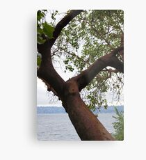 Trees Along Lake Washington Metal Print