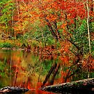 A Reflection Of Fall by Rodney Lee Williams