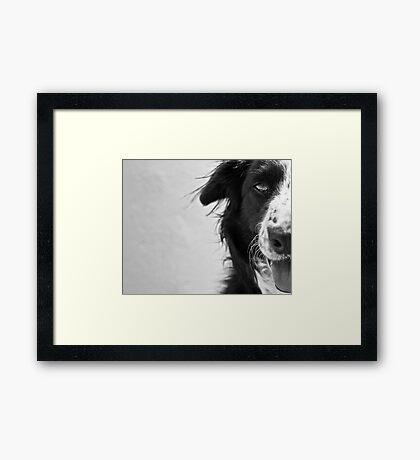 Half the dog Framed Print