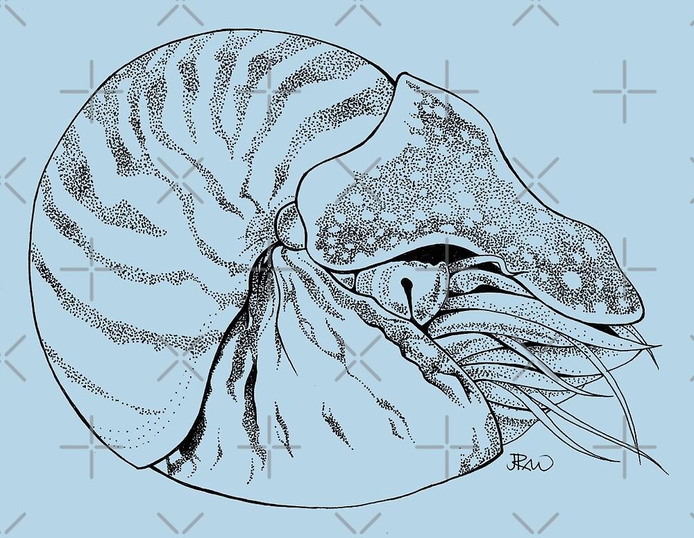 Chambered nautilus by Jen Richards