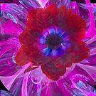 Anemone coronaria by Dale Lockridge