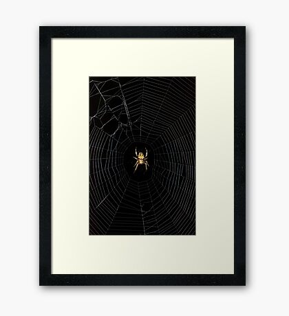 Spider Open for Business Framed Print