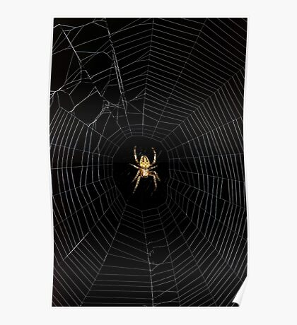 Spider Open for Business Poster