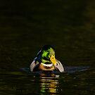 Swim by vasu
