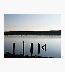 swans in silhouette on the fleet in weymouth,dorset Photographic Print