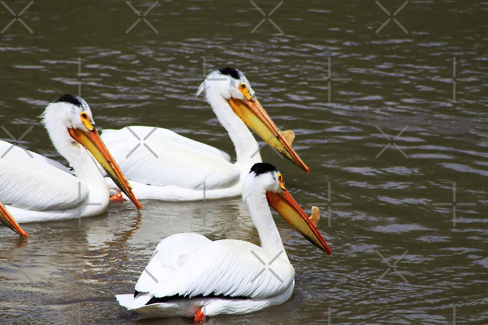 Three Pelicans by Alyce Taylor