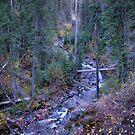 chief joseph trail by Bruce  Dickson