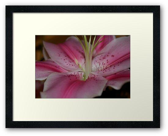 Lillium Flower by Alex Colcheedas