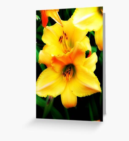 Nature's Beauty © Greeting Card