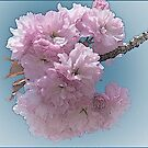 Pink by browncardinal8