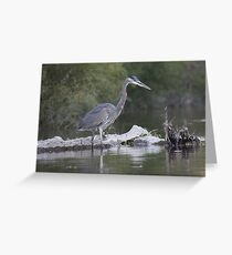 Blue Heron on the Milwaukee River Greeting Card